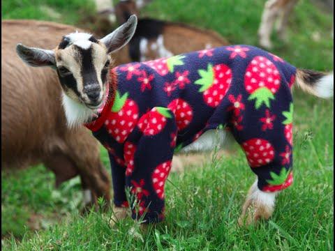 Panther Pajama Jam!