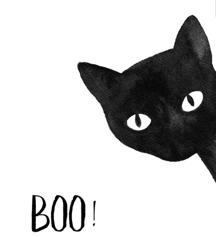 Are Black Cats Actually Bad Luck?